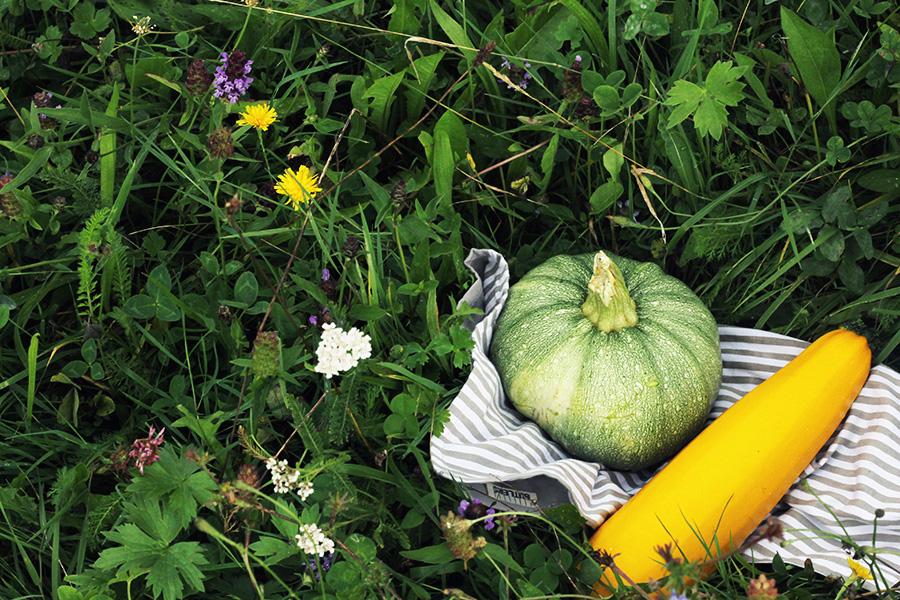 NicetohaveMag-Gemüse-Zucchini-Demeter-Allensbach-Müllerhof