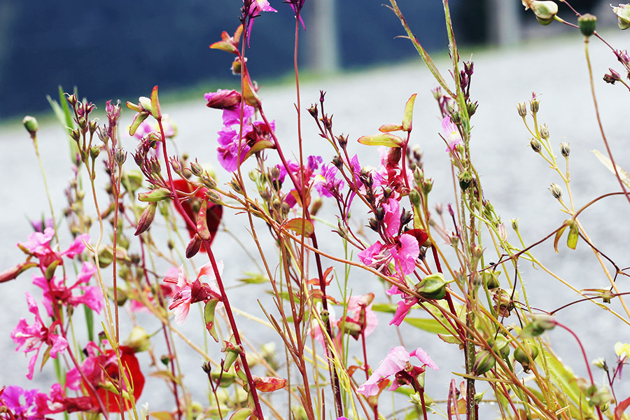 nicetohavemag-reiterkogel-wildblumen-bachgut-hinterglemm-saalbach-biohotel-green-pearls