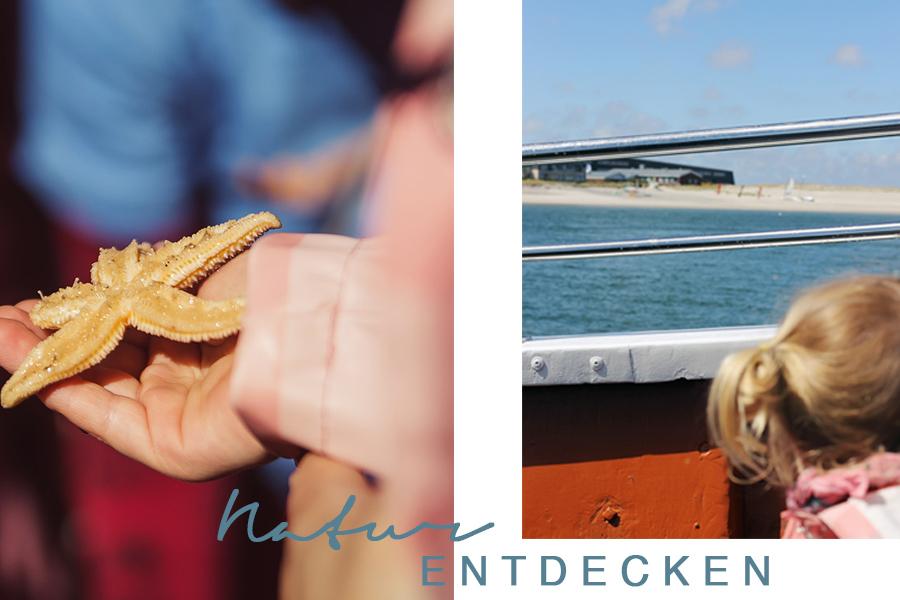 Tag2-NicetohaveMag-Robben-List