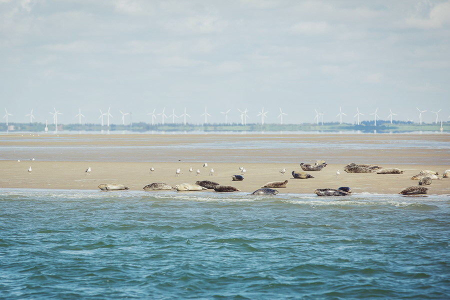 Tag2-Robben-Seehunde-Sylt-NicetohaveMag